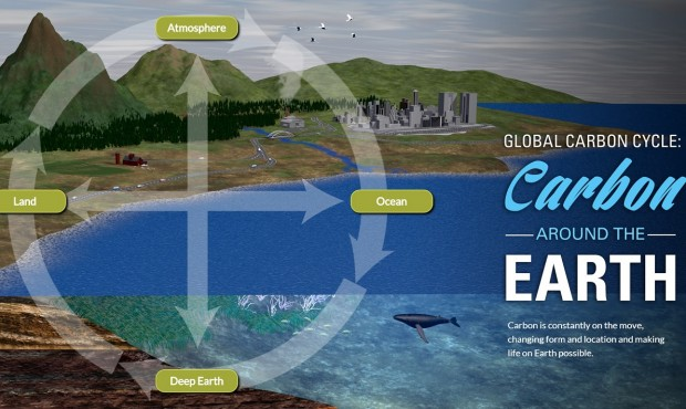 Navigate the Carbon Cycle